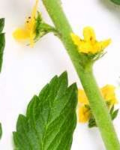 Deva Flower Essence - Agrimony