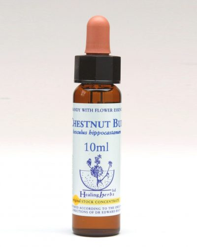 Healing Herbs - Chestnut Bud