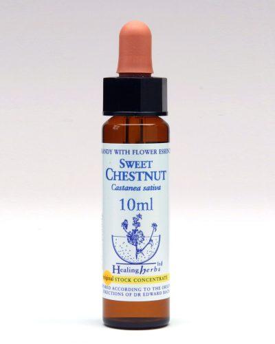 Healing Herbs - Sweet Chestnut